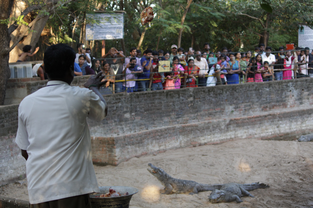 Madras Crocodile Bank Trust & Centre for Herpetology